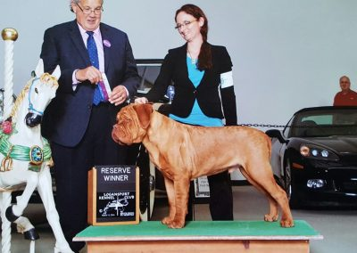 Blooms County Dogue de Bordeaux Awards 3